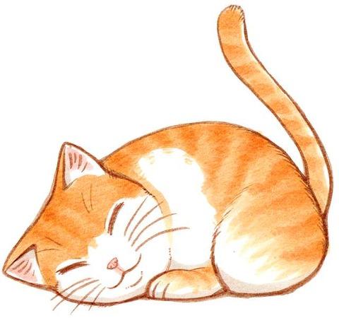 cat_sleep